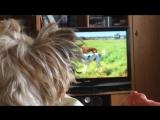 Реалистичное IPTV от Ростелеком!