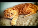 Beste Lustige Katzen Videos 10