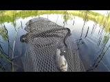Рыбалка в Компании Змей! - Ловлю Карася на Удочку