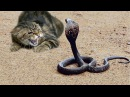 FEARLESS CATS ★ 29 Cats Who Are Totally Badass Epic Laughs