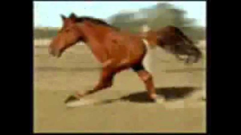 Ничево такое просто конь бежит Кто заржот тот псих