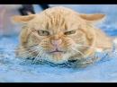 Lustige Katzen Zusammenstellung 10 min Frohes Neues Jahr 2016