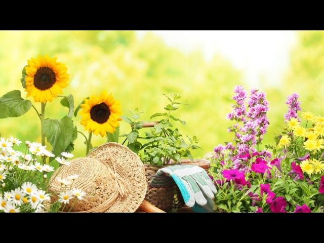15 лайфхаков для садоводов Пусть твоему участку завидуют все соседи