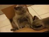 Смешные кошки. Няшные котята)))Приколы с котами!