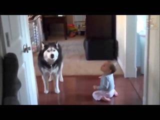 Это видео докажет вам: дети и собаки созданы друг для друга!