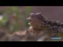 Жизнь Отвратительных Животных . Дискавери Документальный фильм. дикий мир и поведение животных в нем.