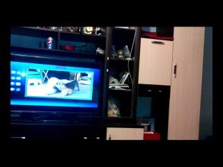 Линка смотрит передачу для собак. Пес-ТВ!))))