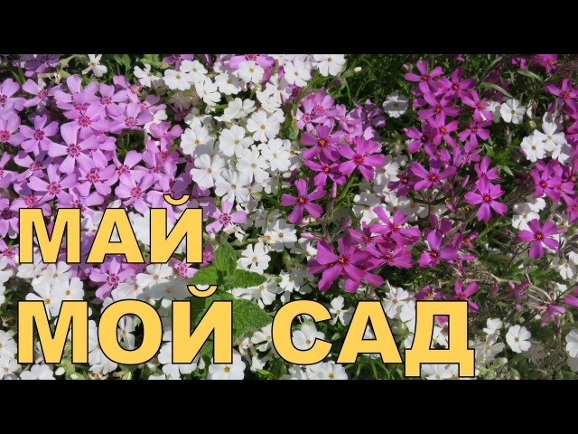 Алёнин сад в МАЕ 2016 Alena's garden in MAY 2016 Allotment diary
