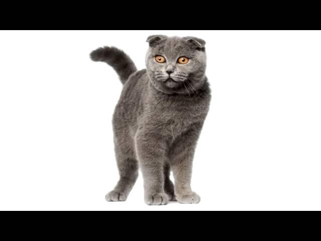 Ты мой миленький хорошенький мой котик