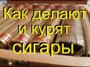 🚬Как делают и курят СИГАРЫ ликбез для начинающих От канала Самогонщиков