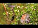 BIRDS IN SPRINGTIME (film)