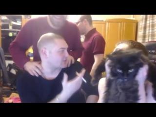 VjLink жестко бьет кота на стриме