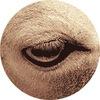 Рисуем коров с закрытыми глазами