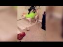 Приколы про животных. Смешные видео про котов и кошек до слез