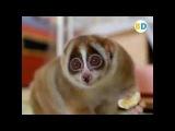 Прикольные звуки животных