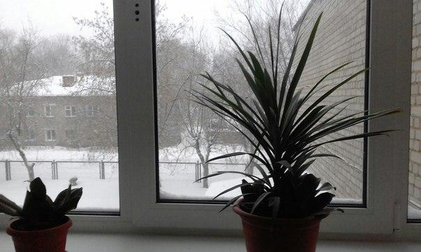 Какой красивый подарок сделала нам погода на 14 февраля. 💕С днем всех