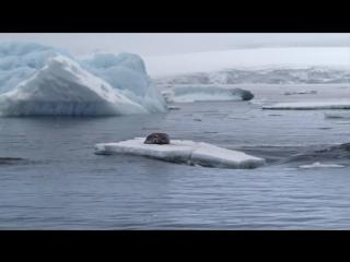 Замерзшая планета (2011) на краю земли
