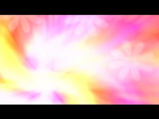 Красивый Фоновый Футаж ромашки на ярком поле