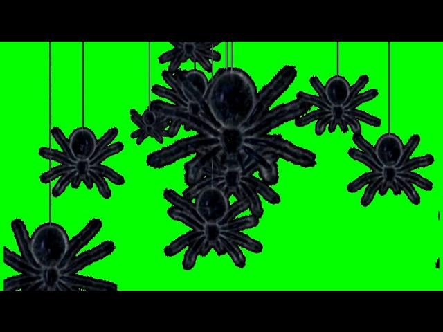 ФУТАЖ ПАУКИ НА ЗЕЛЁНОМ ФОНЕ ЭКРАНА FREE GREEN SCREEN BACKGROUNDS VIDEO FROM yda4aTV
