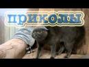 Видео приколы про кошек и собак до слез
