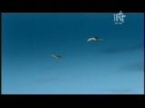 Макс Покровский  Глаза любви (Шансон ТВ)