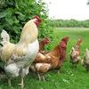Натуральные продукты и домашнее мясо