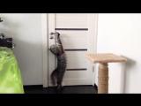 Как кот открывает дверь?