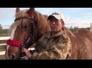 Как подобрать по размеру трензель и уздечку для лошади