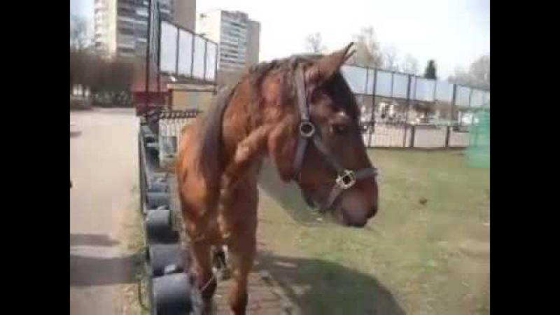 Я снял видео Конь и девушки в городе Орле Город Орёл 27 апрель 2015 год