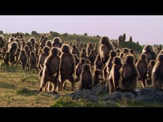BBC: Планета Земля / Planet Earth (2006) - Горы (Mountains) - 2