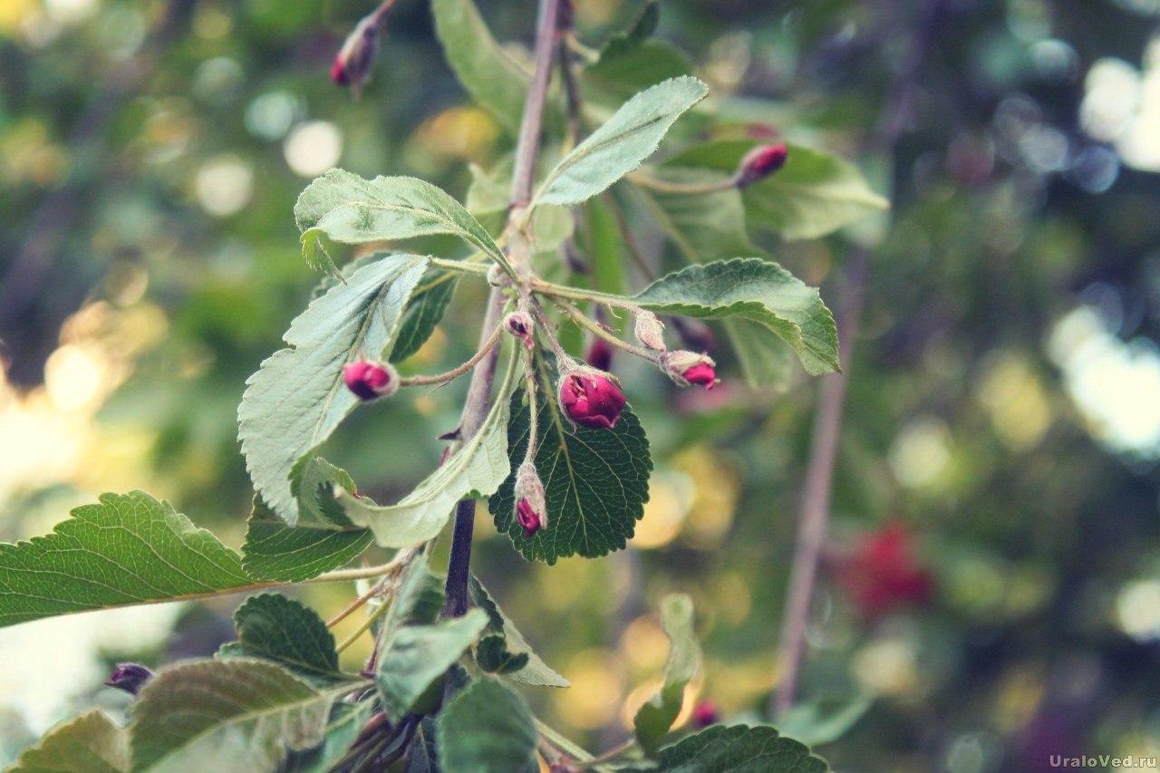 В саду Казанцева