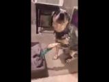 Лучший собачий #MannequinChallenge