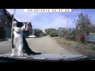 Невозмутимый кот | Прикол с животными 2016