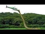 Most Amazing Wild Animals Attacks #30 Giant snake Anaconda Attack - Largest snake longest python