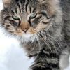 Lapkam.com | Шанс для тварин з притулків