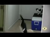 Коты и распылитель
