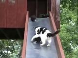 Котята катаются с горки