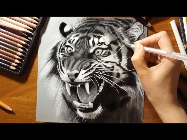 Speed Drawing: a Roaring Tiger   Jasmina Susak