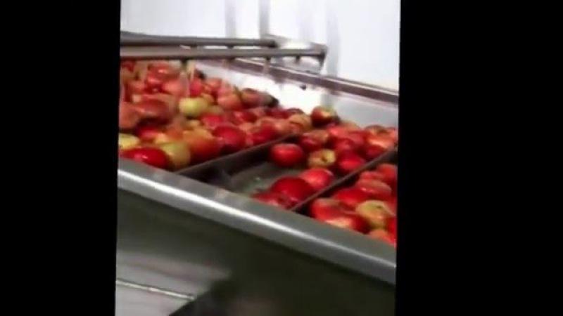 О линиях сушки овощей, фруктов, ягод, HANS BINDER www.hans-binder.ru