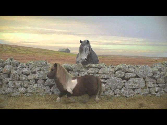 Dance Pony (Moonwalk)