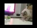 Cats face when Thug Life