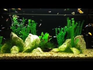 мой аквариум на 200 литров