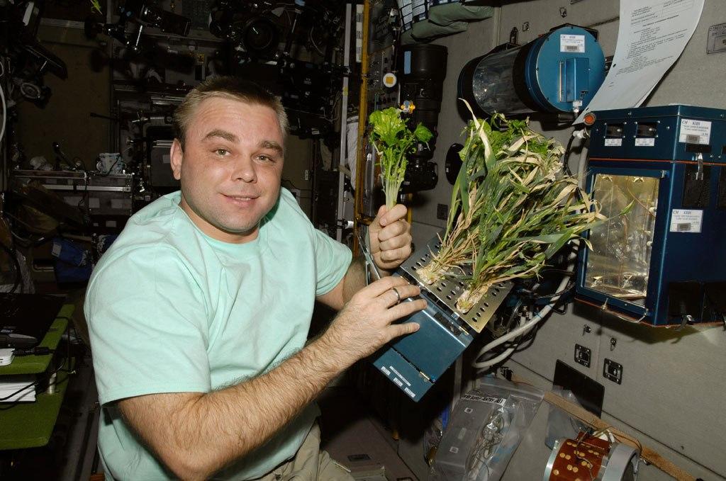 Растения на МКС