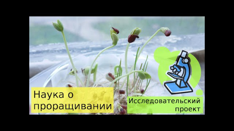 19. Как прорастить семяна фасоли и пщеницы - исследовательский проект для детей