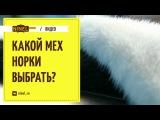 Как выбрать норковую шубу?  Какой мех выбрать - зимний и летний, самки или самца?