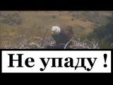 3. ВИХРИ ВРАЖДЕБНЫЕ ВЕЮТ НАД НАМИ / Крупнейший хищник планеты / Большой Белоголов ...