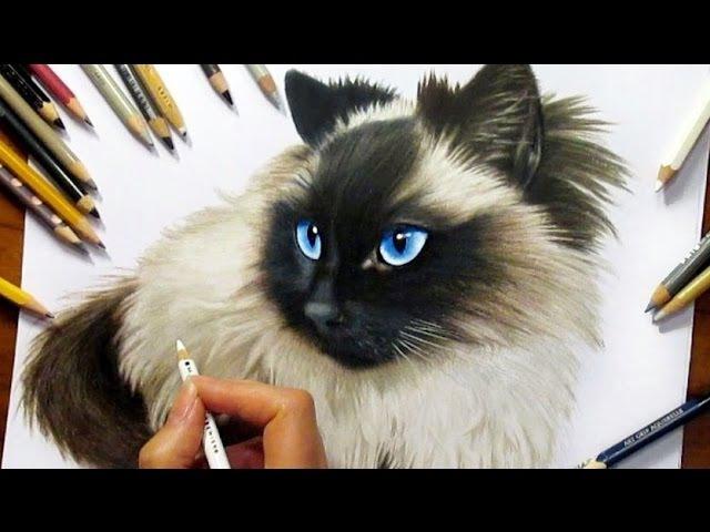 Drawing Subscribers' Pets 2 ❤ Zida, Ragdoll Cat from Holland - Speed Draw   Jasmina Susak