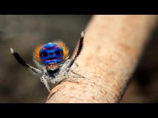 Удивительный Дом Пауков / The Amazing Spider House (2015) HD
