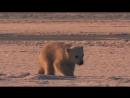 Замерзшая планета 2011 весна
