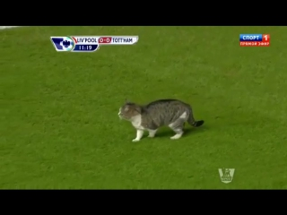 Футбол. Кот на поле в матче Ливерпуль - Тоттенхэм чемпионата Англии.